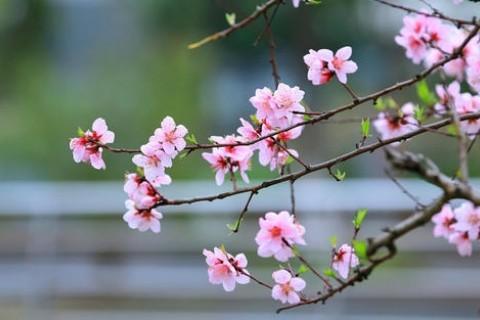 适合发朋友圈的桃花文案,春天桃花开心情美美的