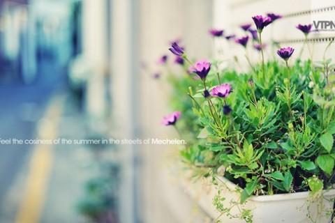 春日踏青发朋友圈的温柔小清新句子,适合春天的文艺说说