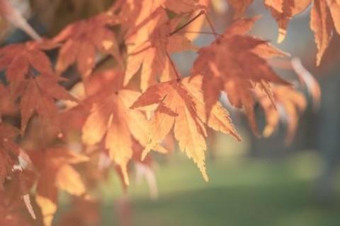 非常适合秋天下雨天发的朋友圈说说句子